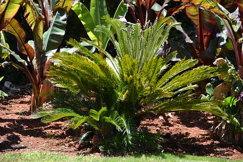 (13) Le Parc du Mugel et son jardin exotique - La Ciotat 33106263676_152472f6eb