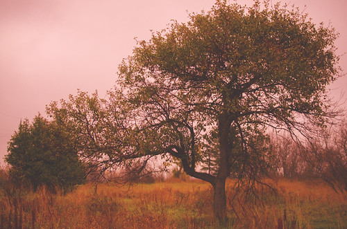 365project 299365 october262013 2013 nikon 2013inphotos ontario canada d7000 ottawa 40mm nature mothernature pink tree lonelytree green yellow autumn fall kanata field lotsofphotoshop vivid notmyusualstyle thetreewheretheboneshide flashfix flashfixphotography