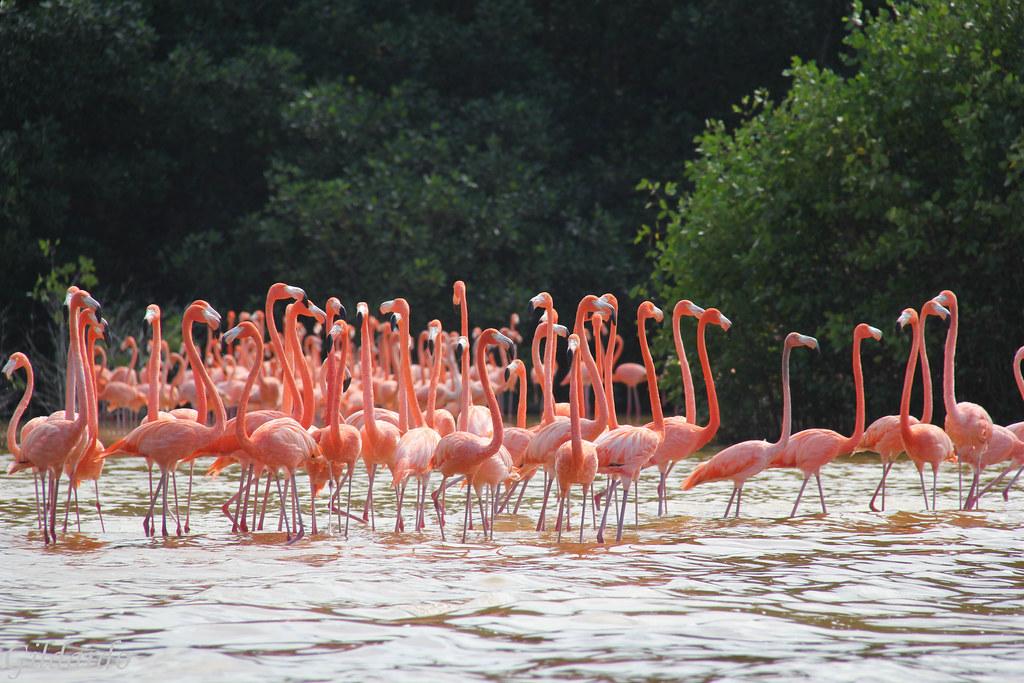 Flamingos, Celestún | Gildardo Sánchez | Flickr