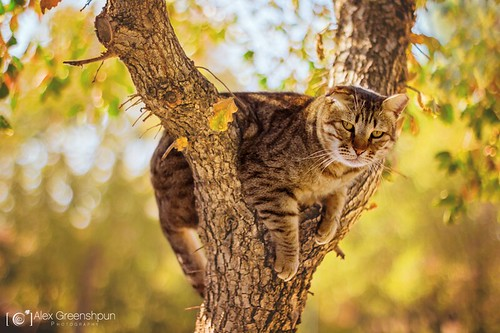 """Climb a tree"" they said 