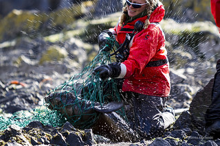 Fur seal rescue 4/6 | by escapewindow