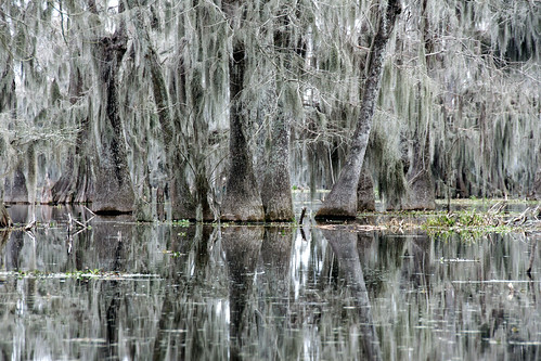 trees lake louisiana atchafalaya swamp spanishmoss cypress 2014 breauxbridge caiun