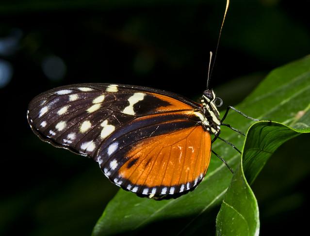 20160626_Cockrell Butterfly Center_0017