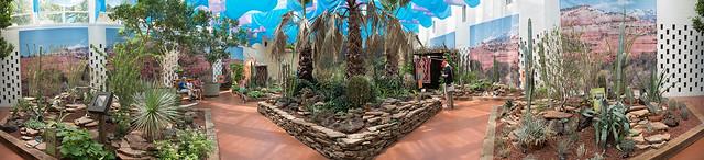 Cactus Show Panorama