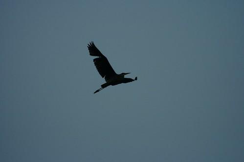 sky bird heron nature wisconsin landolakes