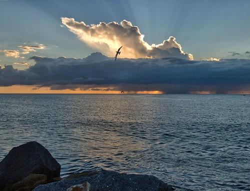 sunset seagulls sunshine rain weather birds clouds day florida jetty sunburst sunbeams gf1 fav10 fav5 views100 views200 views400 views300 hdranything projectweather cloudsstormssunsetssunrises