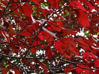 Fall Foliage | by Martin Ibert