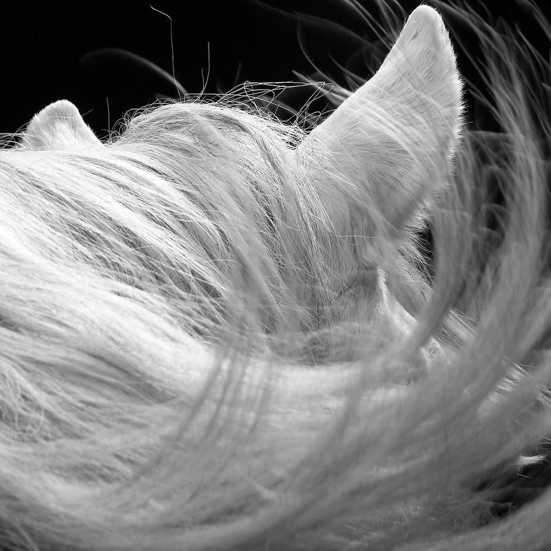 horse_A.P (12)
