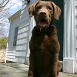Rowan on the porch