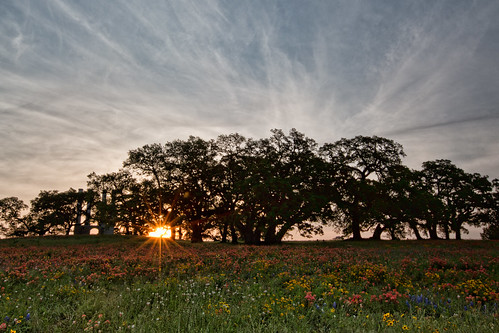 morning flowers trees sky sun color nature field sunrise canon day texas cloudy filter wildflowers independence daybreak reallyrightstuff rrs singhray iknowwhereyouare 5dmarkiii sunskycloud
