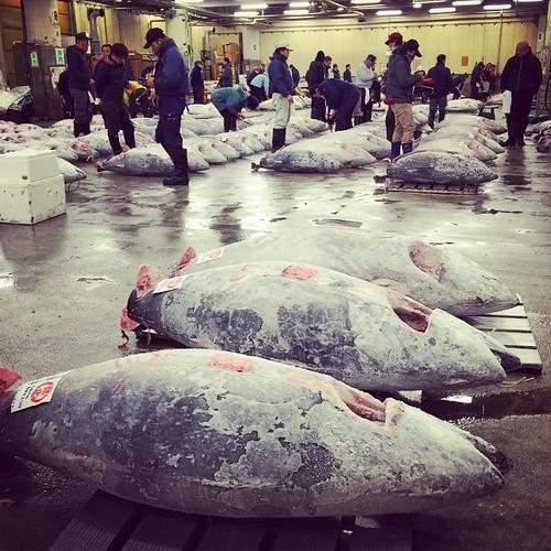 #tsukiji #tuna #auction #Tokyo #japan | by Phil~