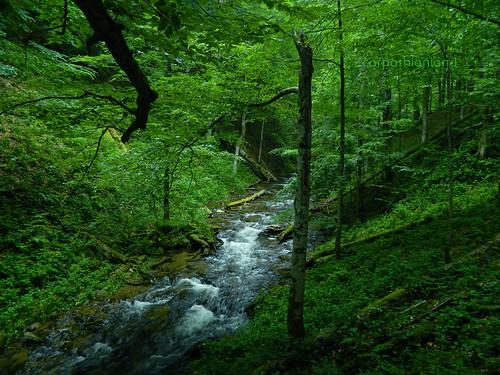 Nergănița Stream, Izvoarele Nerei old-growth forest, Semenic Mountains National Park, Romania | by Carpathianland