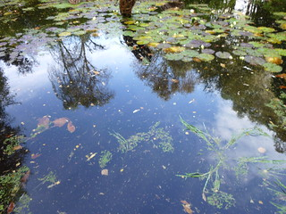 Oct 2013 Inverewe Gardens (13) | by Jols.