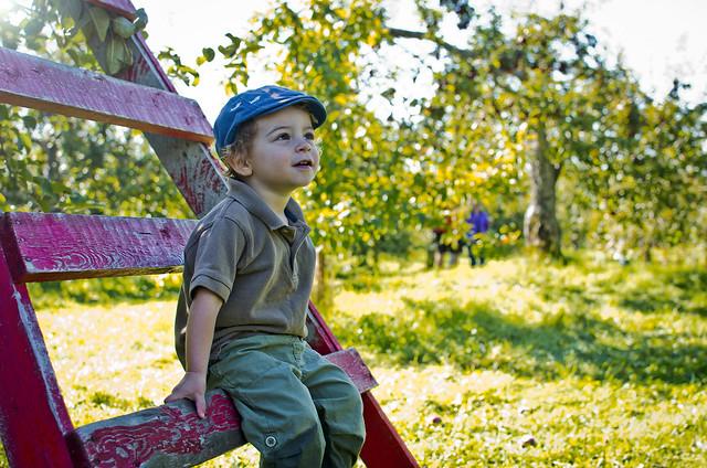 Apple picker (explored)
