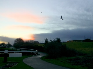 Maryhill flight seagull