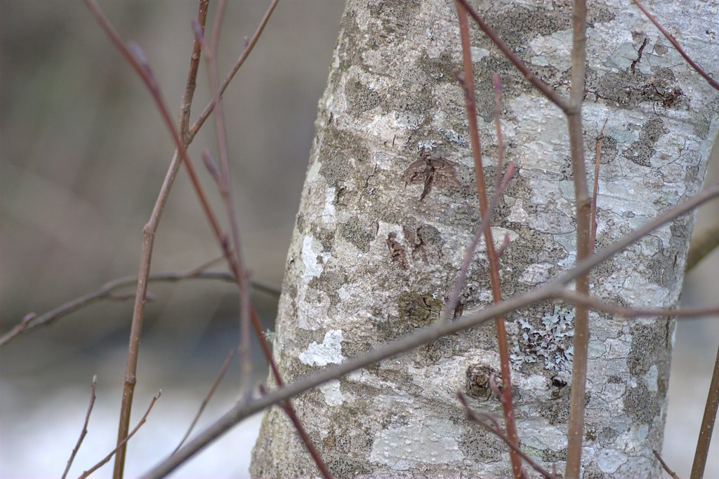 Twigs and Trunk