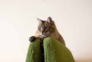 cat | by NEKOFighter