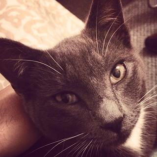 Cat head | by javiphoto.com