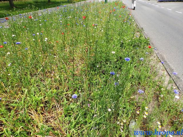 2016-06-01    4e Erfgooierstocht Huizen 25 Km  (68)
