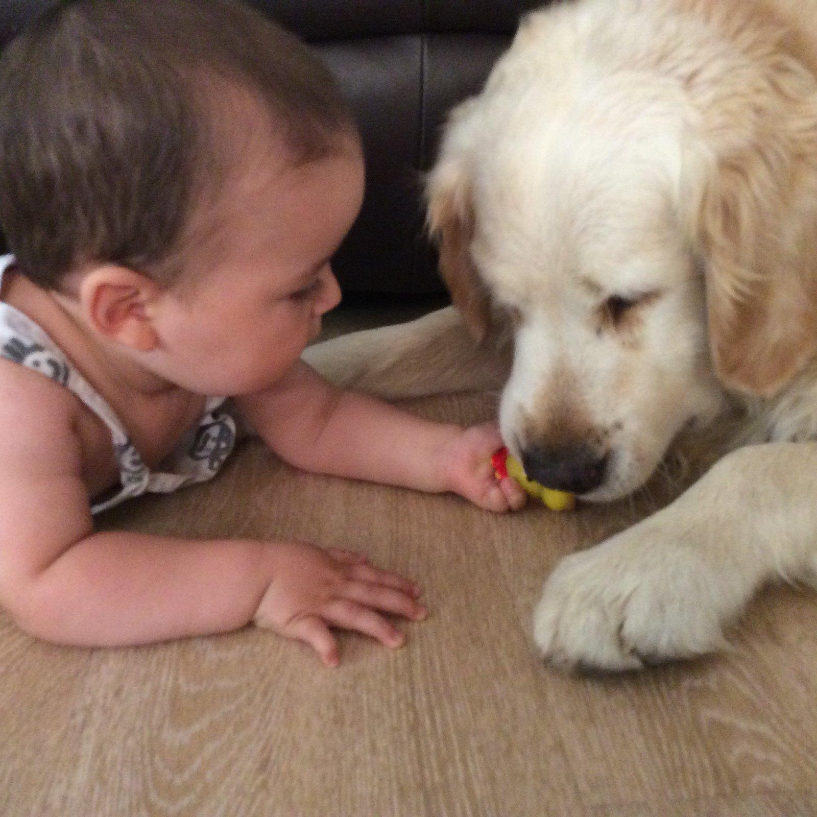 Más juegos con los cachorros