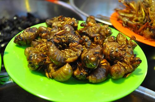 FILE NAME: adult cicadas, Harbin, China (Didn't eat these).jpg  CAPTIONS IN DIFFERENT LANGUAGES: SV:   LINK IN CAPTION / LINK TO SOURCE: https://www.flickr.com/photos/sharonhahndarlin/8899833237/in/photolist-eyrYmD-imS3cL-ND2PWB-XXWtCk-65cLVZ-6kEeym-26Kmqmt-NqUxAw-6kAdNB-6kAdWT-6kEGXb-HQsgKd-2bvmhRc-JsWeL4-6kAx2M-NqUwNQ-N9Mn9N-6kEAWh-N9LkgS-Mm5j83-a8E69h-6kAqJi-Svqq16-6kAhUr-k7SKPR-6kAqSX-6kEck7-MHdonE-6kAdBr-MDe3jp-ZSm9EK-9iB5tb-qGUDjb-2VhPuC-esJ4MA-afbEz3-9ixUEK-imS6Mb-a4dfGh-8JSY32-qZ2VB5-imS6sT-imS5tN-fuxqUx-GYwnrd-rSFGDN-52ormQ-XJQuJQ-2c5YGwA-F9htTk  IMAGE ADDRESS: https://live.staticflickr.com/7353/8899833237_c2fa8e62b1.jpg  DOWNLOAD PLATFORM: Flickr  TITLE: adult cicadas, Harbin, China (Didn't eat these)  KEYWORDS: cicadas, Party Bugs  AUTHOR: Sharon Hahn Darlin - https://www.flickr.com/photos/sharonhahndarlin/  LINK TO AUTHOR'S PAGE: https://www.flickr.com/photos/sharonhahndarlin/  COPYRIGHT: Sharon Hahn Darlin - CC BY 2.0  THIS INFORMATION WAS VALID ON 2.4.2021