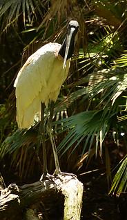Belize Zoo -Kathy -4 | by KathyCat102