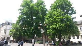 Grünanlagen im Stadtbild