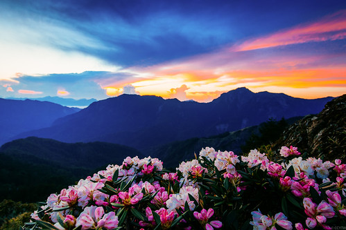 mountain sunrise canon dawn twilight taiwan wideangle rhododendron 6d 合歡山 杜鵑 nantou 日出 alpinerose hehuanshan 火燒雲 玉山杜鵑 合歡尖山 mthehuan 高山杜鵑 ef1635mmf4lisusm