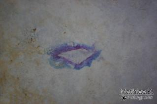 Wie ein Kuss auf Stein
