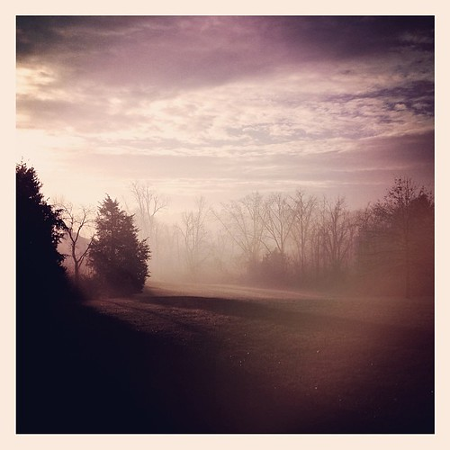 morning trees sun fog sunrise square foggy sierra squareformat iphoneography instagramapp uploaded:by=instagram