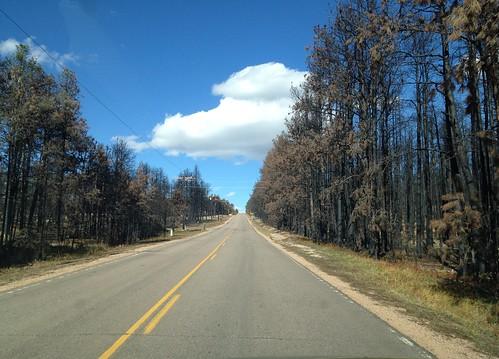 colorado blackforest