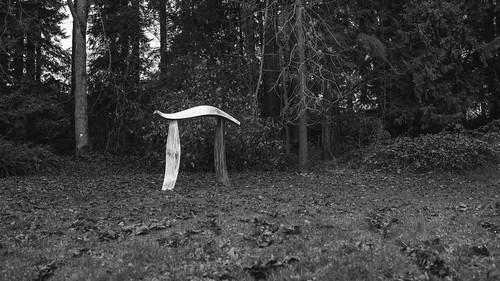 π pi math forest nature blackandwhite portangeles canon trees sculpture symbol canoneos5dmarkiii sigma35mmf14dghsmart washington