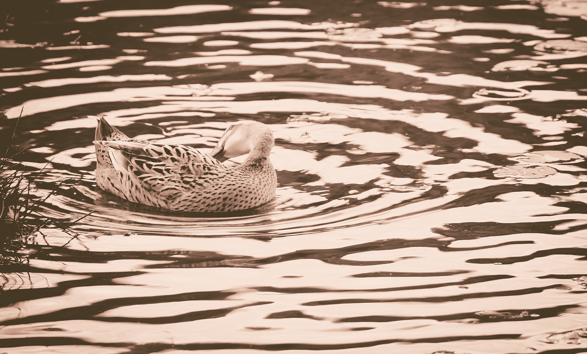 creating ripples
