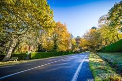 Mt Macedon Autumn Colours-18