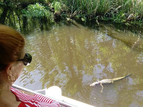 louisiana alligator cajun cajunswamptour