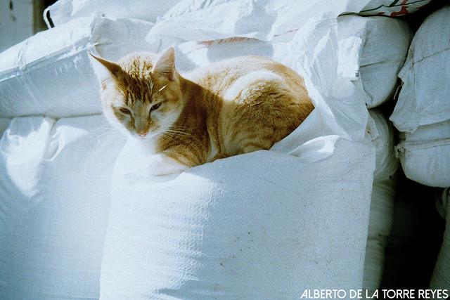 Rollei 35 gato
