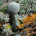 Fuzzy ball cactus and lichen-covered rock at Joder Ranch.