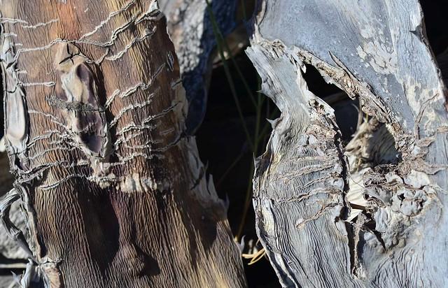 succulent fissures