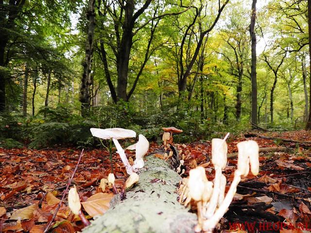 20-10-2012     Wedeblick-   Driebergen        25 Km (148)