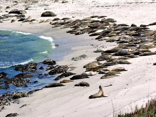ocean california sleeping beach station harbor monterey sand marine university pacific grove sandy montereybay stanford seals peninsula hopkins joelach