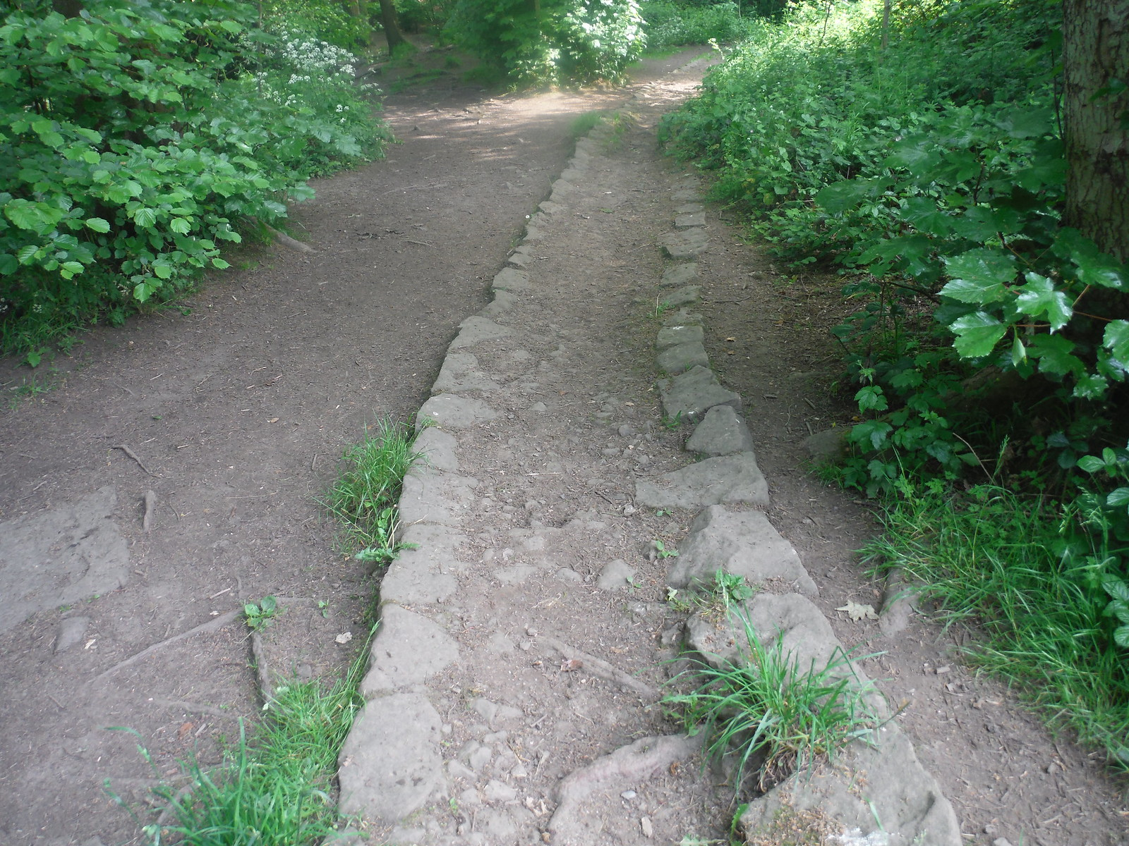 'Stone Rails' sunken trackway, Ecclesall Woods SWC Walk 267 - Sheffield Circular (via Porter, Limb, Sheaf and Gleadless Valleys)