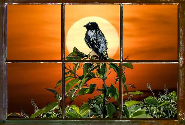 Bird Out My Window