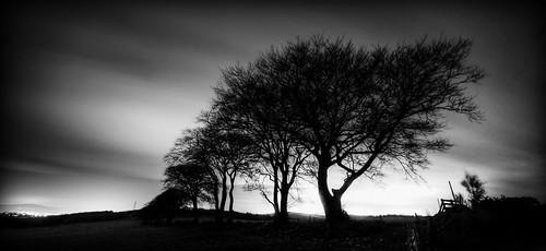 tree blackwhite aberdeenshire easteraquhorthies inverurie eastaquhorthies