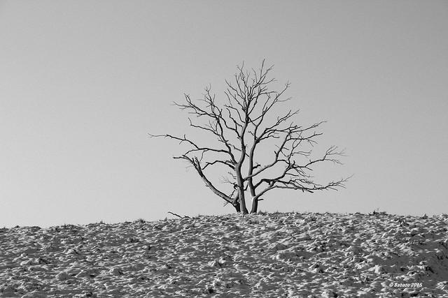ALLEINSTEHEND im Bergerbos