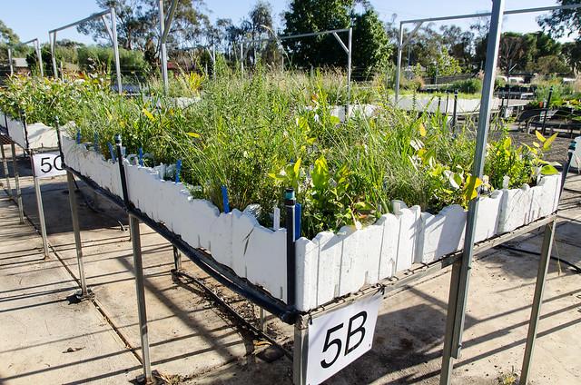 COP - buffers to bushland species 2013 - 4208