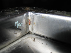 Close up picture of a corner made of stainless steel metal with a reddish-brown fly pupae attached to the steel.
