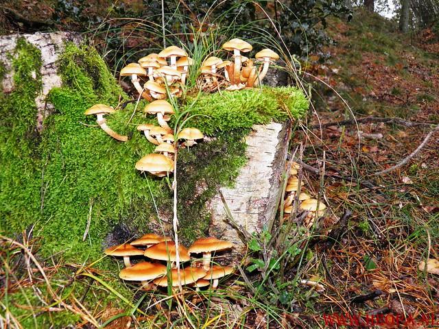 20-10-2012     Wedeblick-   Driebergen        25 Km (75)