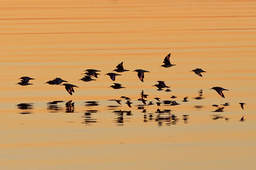 sunset orange reflection birds sanfranciscobay sanleandromarina 1on1sunrisesunsets nationalgeographicyourshot