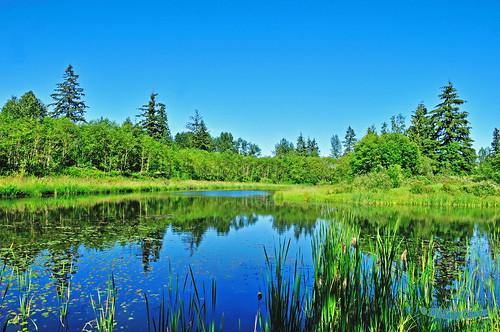 landscape scenic spring smallaperture serene tranquil water lake reflecting reflection trees nature grass marsh langleybc lowermainland bc britishcolumbia canada nikond300 nikon