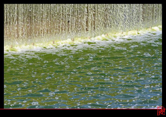 Des algues vertes dans la Fontaine